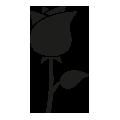 0027_Rose